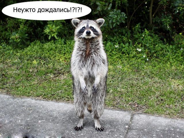 Период пикового роста цен в Украине пройден, - Минэкономики - Цензор.НЕТ 583